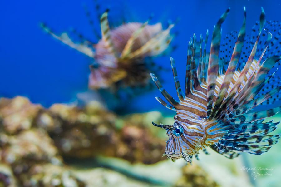 Aquarien-Fotografie-1