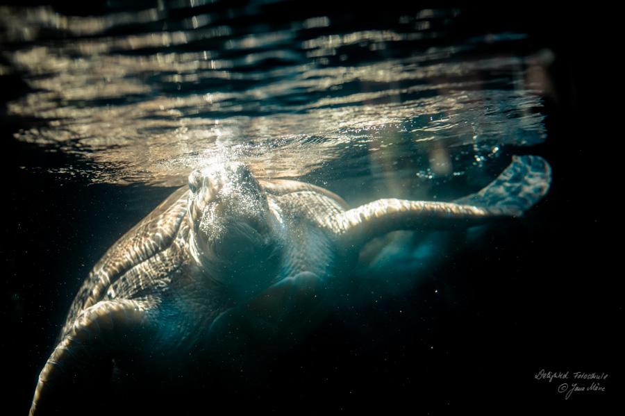 Aquarien-Fotografie-6