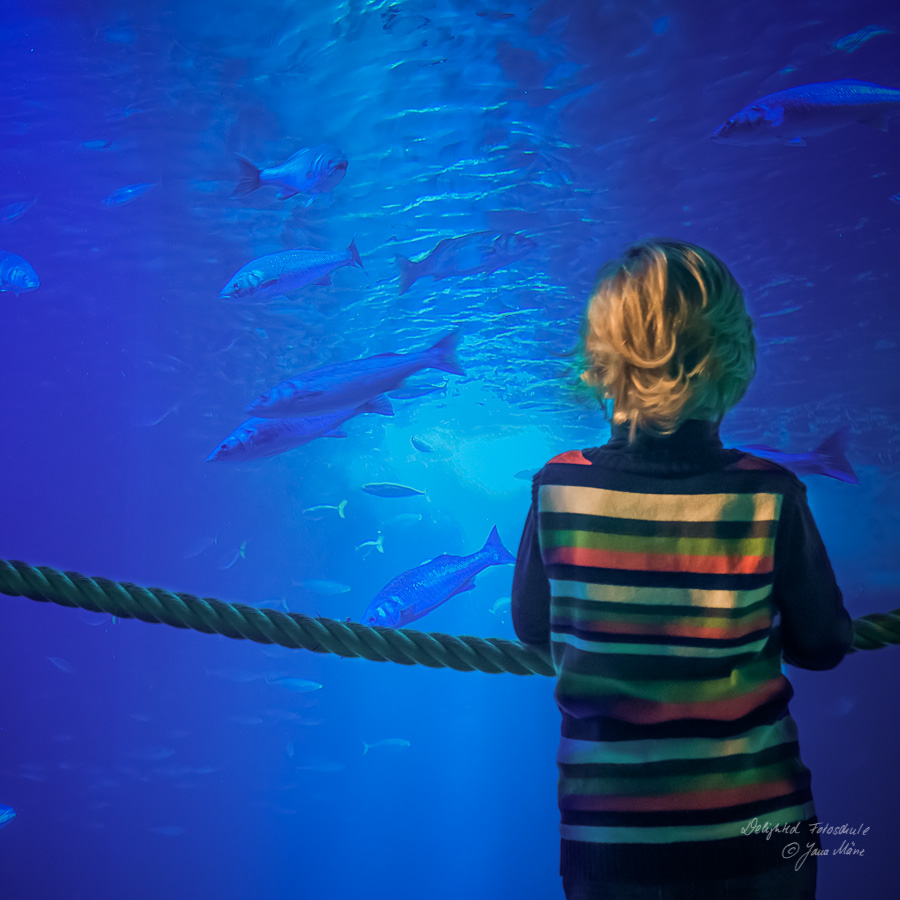 Aquarien-Fotografie-7
