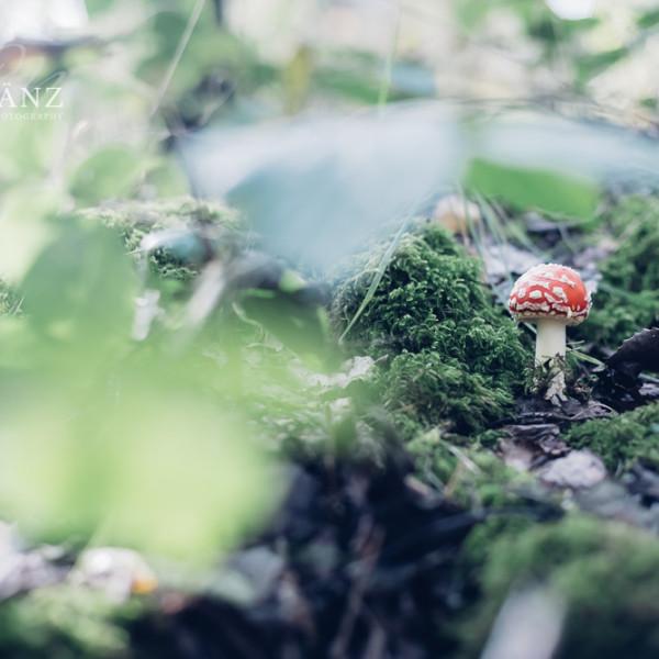 Natur- und Landschaftsfotografie ist keine Frage der teuersten Fotoausrüstung und einer aufwendigen Fernreise. Viel wichtiger ist das Sehen und Wahrnehmen eines ganz besonderen Motivs. Das kann direkt vor deiner Haustür liegen und noch so klein und unscheinbar sein. Mit ein wenig Kreativität und der Anwendung von Komposition, Licht und Blende machst du aus einem langweiligen Bild ein ganz besonderes Foto. Ich möchte dir meine Herangehensweise zur Naturfotografie gerne vermitteln. Dabei gehe ich ganz individuell auf deine fotografischen Vorkenntnisse ein und verrate bei einem gemeinsamen Fotospaziergang Übungen, kreative Bildgestaltung und persönliche Tipps. Dabei geht es nicht nur um die Kameratechnik, sondern auch um das Sehen, Wahrnehmen und die Inspiration, die du in der Natur zu jeder Jahreszeit finden kannst. Ich werde dich nicht mit grauer Theorie langweilen, sondern vielmehr vor Ort auf deine Fragen eingehen. Individuell und persönlich. Komm mit mir auf einen Naturfotografie-Spaziergang an einem der schönsten Orte im Muldental: Die Mulde bei Grimma, der romantische Jutapark und das Fachwerkdorf Höfgen laden zu jeder Jahreszeit zu einem Naturfotografie-Workshop ein.