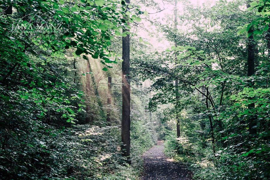 Im Einklang mit der Natur: Mit kreativen Motiven zu mehr Ruhe un