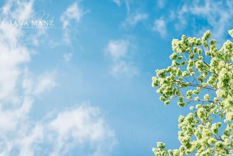 Fotospaziergang, Frühling, Höfgen, Mulde, Ulme, Ulmus, laubbaum, ulmenblüte