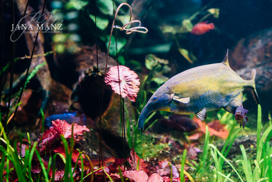 Aquariumfotografie: Fantastische Unterwasserwelt im Aquarium